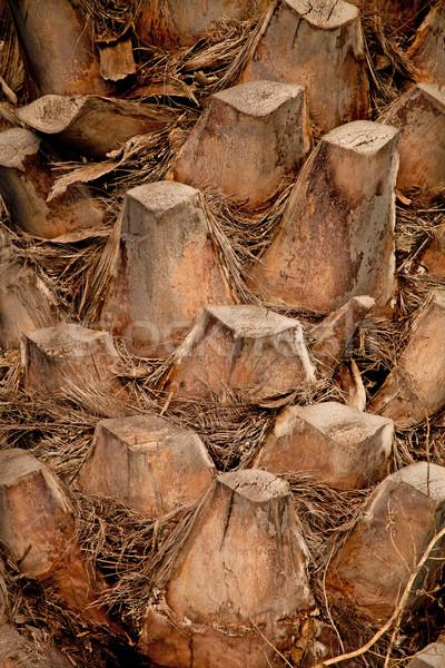 palm tree trunk Stock photo © marylooo