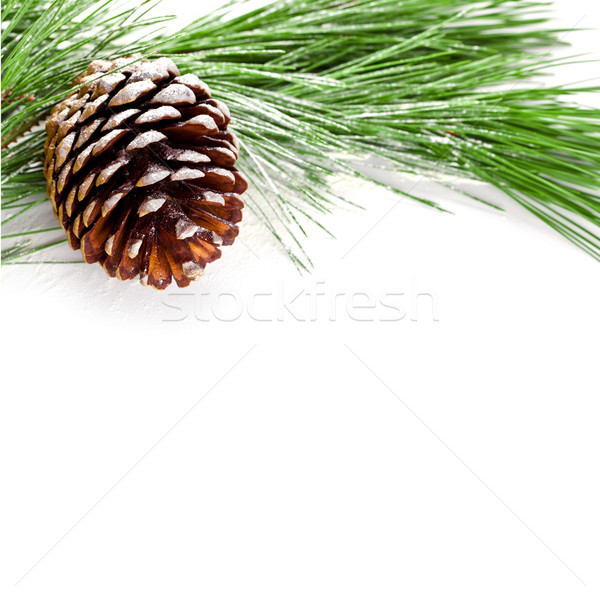 fir tree branch with pinecone Stock photo © marylooo