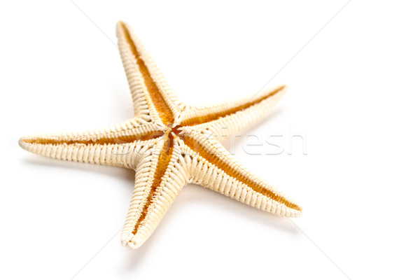 starfish  Stock photo © marylooo