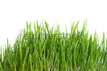 fresh wet grass  Stock photo © marylooo