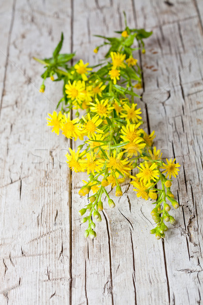 Selvatico fiori gialli primo piano rustico legno fiori Foto d'archivio © marylooo