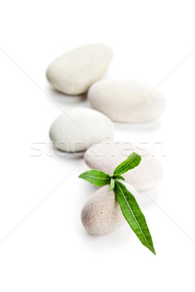 Groen blad stenen geïsoleerd witte voorjaar gras Stockfoto © marylooo