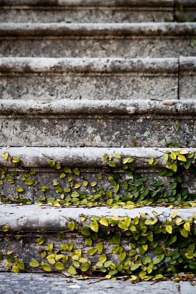 Edad escaleras parque árbol edificio forestales Foto stock © marylooo