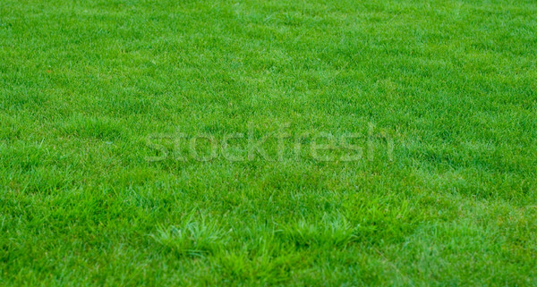 green grass Stock photo © marylooo