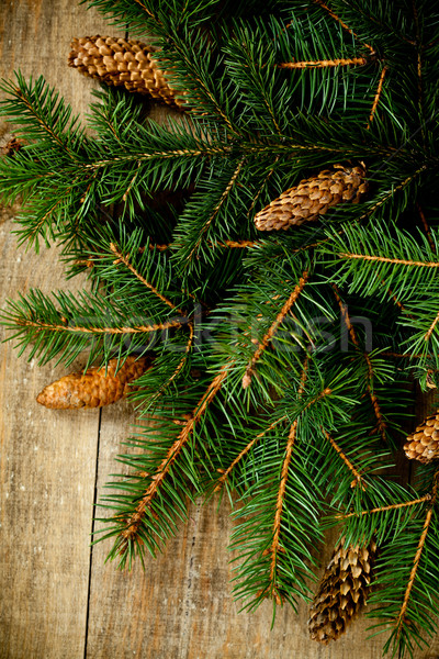 christmas fir tree with pinecones Stock photo © marylooo