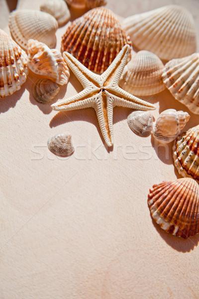 Mer obus star bois plage Photo stock © marylooo