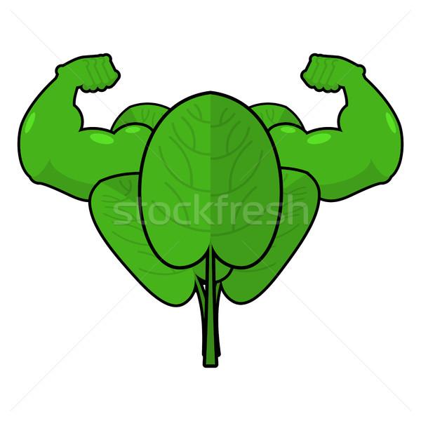 Szpinak silne przydatny zioła duży mięśni Zdjęcia stock © MaryValery