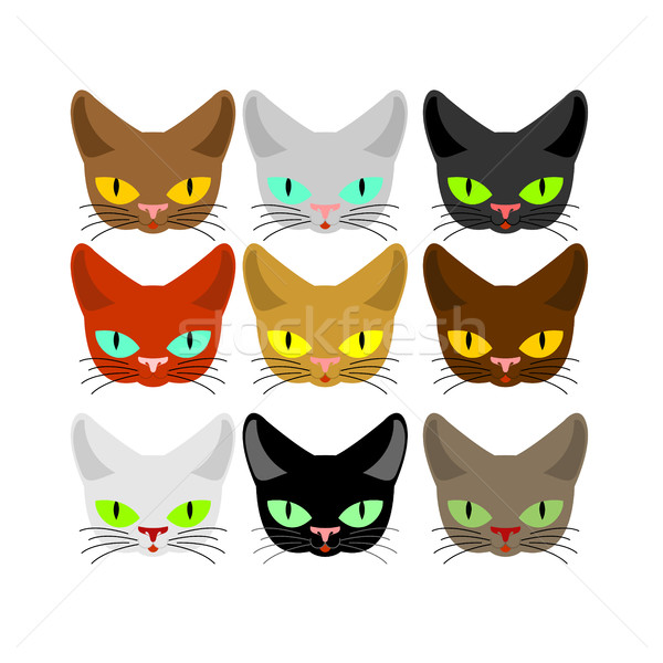 Cat face set. Head cats different color. Muzzle pet collection Stock photo © MaryValery