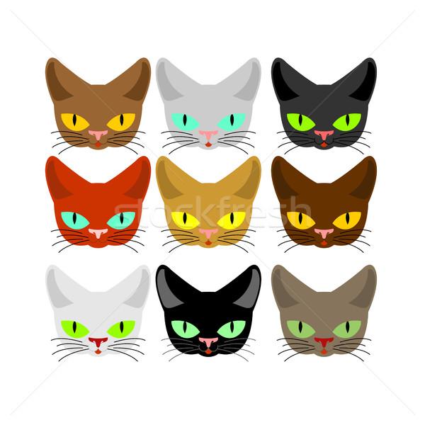 Kot twarz zestaw głowie kotów inny Zdjęcia stock © MaryValery
