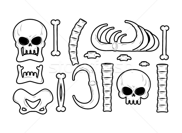 Bones set. Anatomy icons. Skull and spine. Jaw and pelvis. Ribs  Stock photo © MaryValery
