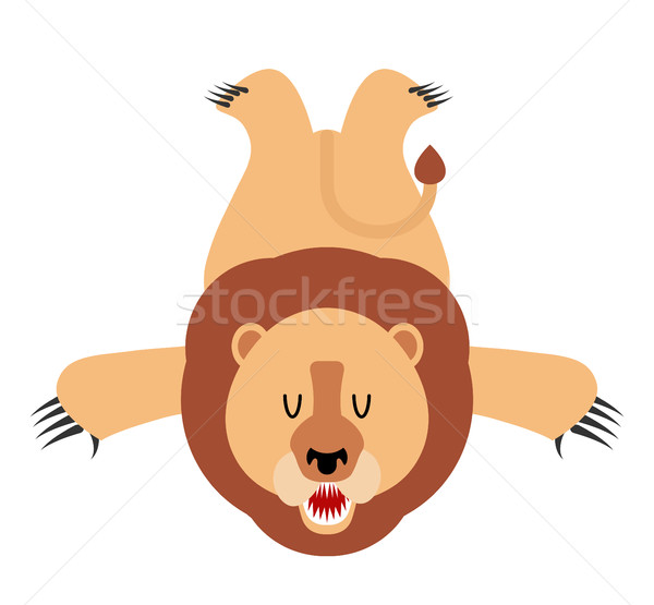 Lion skin carpet trophy Hunter isolated. African leo predator. F Stock photo © MaryValery