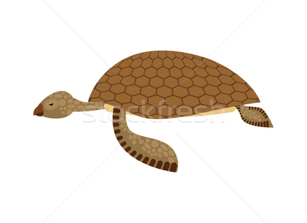 Sea turtle isolated. Water reptile on white background Stock photo © MaryValery