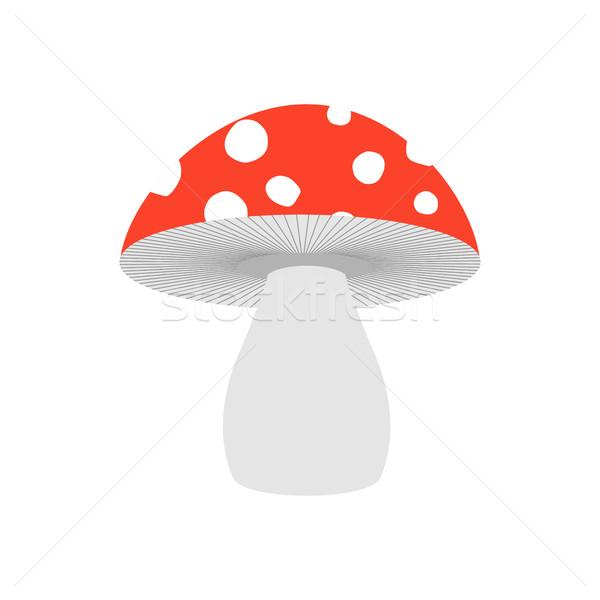 Geïsoleerd giftig champignon witte natuur najaar Stockfoto © MaryValery