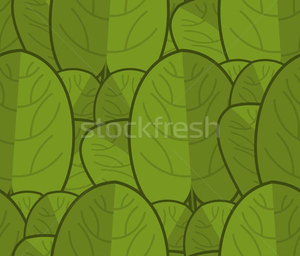 ıspanak taze yeşil süs marul Stok fotoğraf © MaryValery