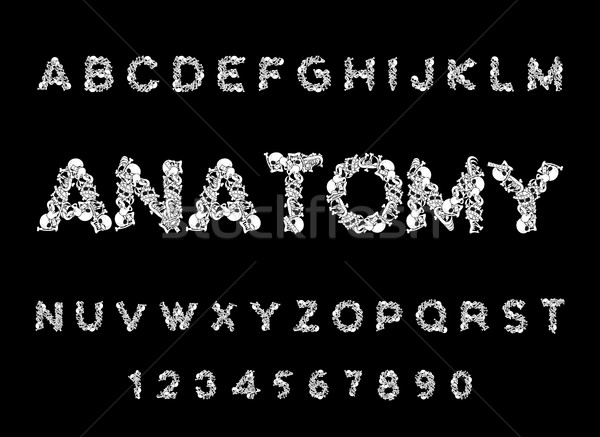 Anatomy font. Skeleton ABC. Letters Bones. Skull and spine. Jaw  Stock photo © MaryValery