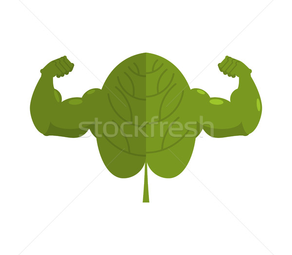 Strong spinach. Powerful herbs for muscle growth. bodybuilder sa Stock photo © MaryValery