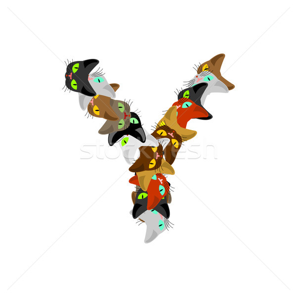 letter Y Cat font. Pet alphabet symbol. home animal ABC sign Stock photo © MaryValery