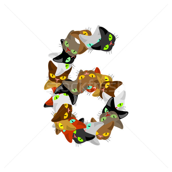 Number 6 cat font. Cats number six. Pet alphabet sign. home anim Stock photo © MaryValery