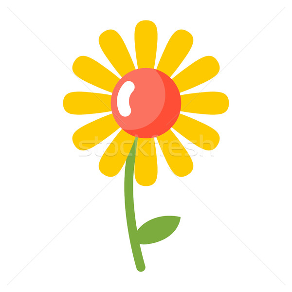 Stock photo: Chamomile isolated. Flower on white background