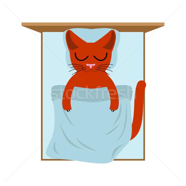 Kot bed poduszkę koc snem kotek Zdjęcia stock © MaryValery