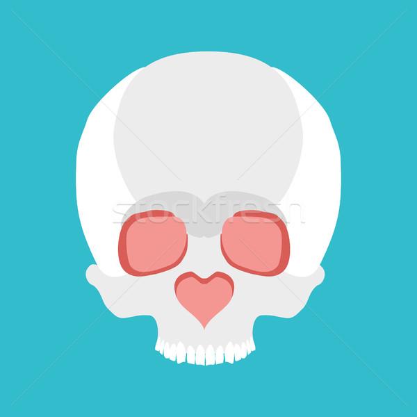 Skull love. Nose heart. Valentines Day illustration Stock photo © MaryValery