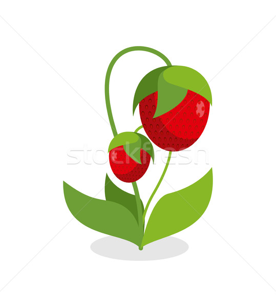 Rojo fresas verde jugoso Berry hojas Foto stock © MaryValery