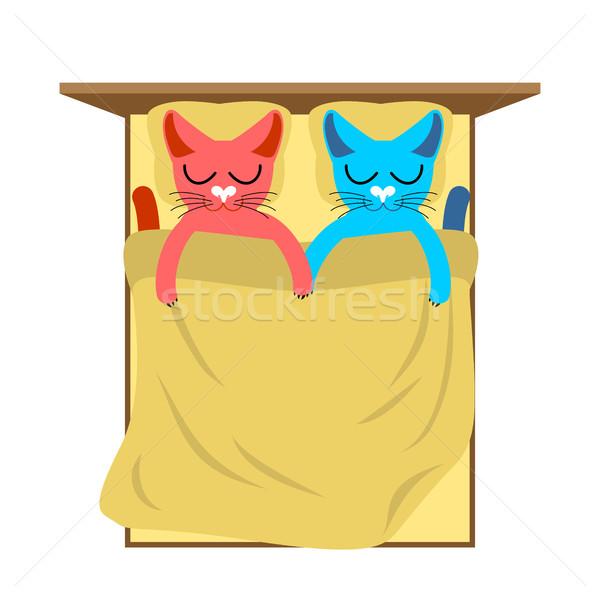 Macskák ágy aranyos macska alszik szeretet Stock fotó © MaryValery