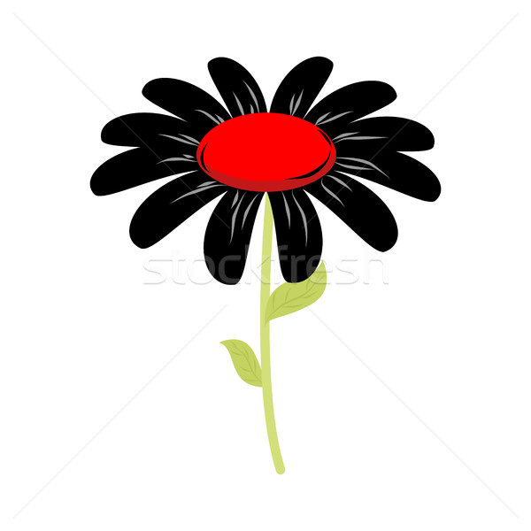 Black flower isolated. floret of sorrow and grief on white backg Stock photo © MaryValery