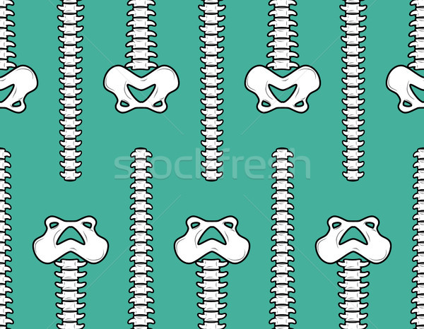 Spine and pelvis seamless pattern. Bone ornament. Medical anatom Stock photo © MaryValery
