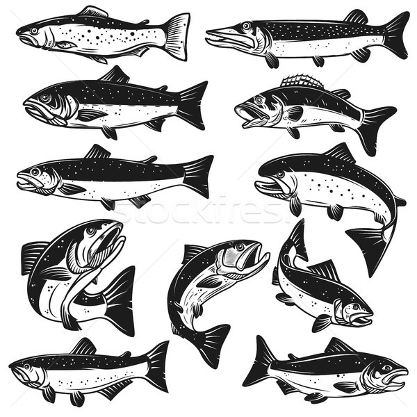 Big set of fish illustrations. Pike, salmon, trout, perch. Design elements for fishing logo, label,  Stock photo © masay256