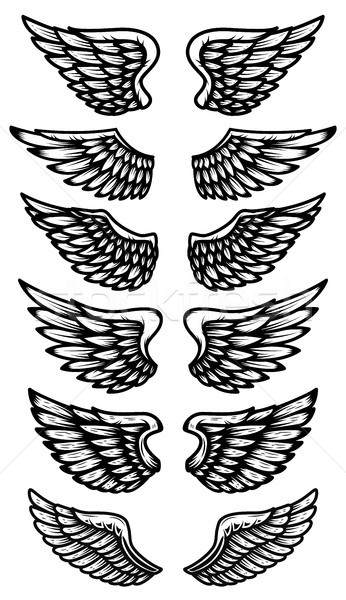 Ayarlamak kanatlar yalıtılmış beyaz logo Stok fotoğraf © masay256