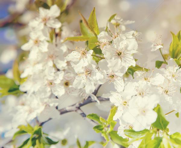 Bloeien boom voorjaar vliegen witte hot Stockfoto © Massonforstock