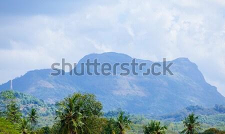 Sri Lanka tropical forest Stock photo © Massonforstock