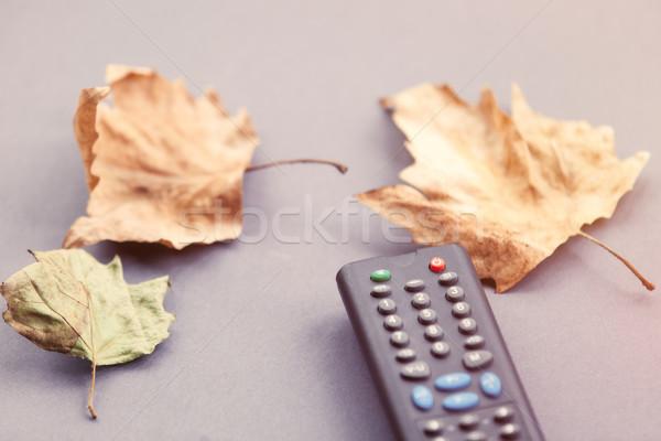 Contrôle automne rétro couleur automne Photo stock © Massonforstock