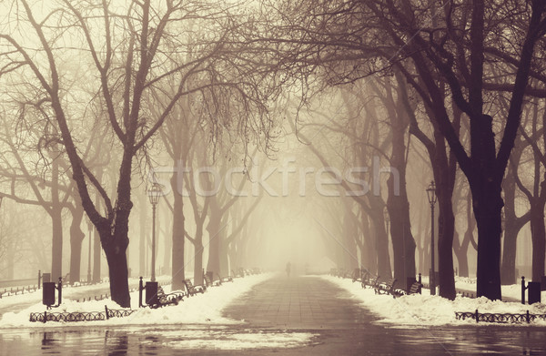 Winter alley in Odessa, Ukraine. Stock photo © Massonforstock