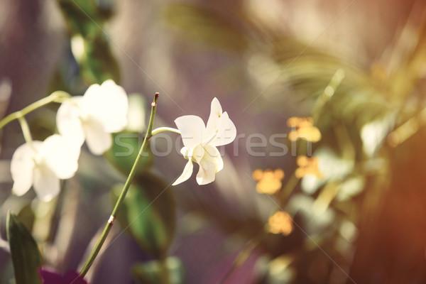 beautiful orchid flower  Stock photo © Massonforstock