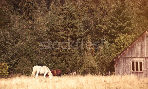 Old house and horses Stock photo © Massonforstock
