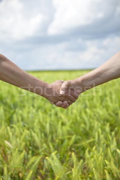 Stretta di mano verde campo di grano primavera mano Foto d'archivio © Massonforstock