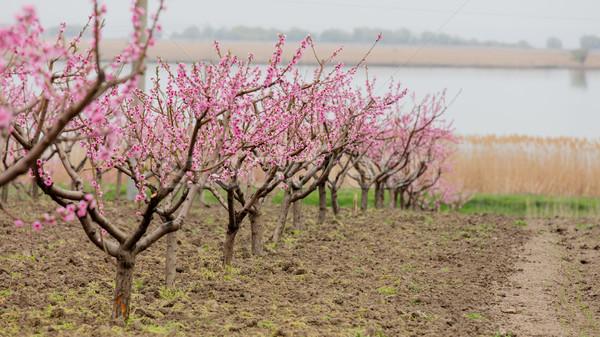 Foto belo árvores maravilhoso pequeno Foto stock © Massonforstock