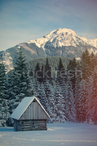View at lonely house in the forest Stock photo © Massonforstock