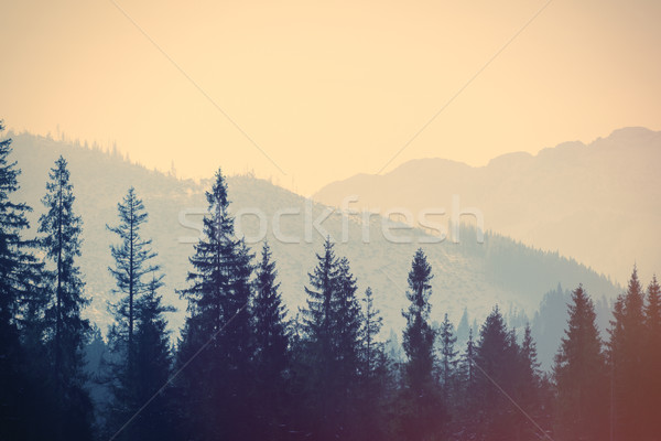 View on winter mountains Tatry, Poland  Stock photo © Massonforstock