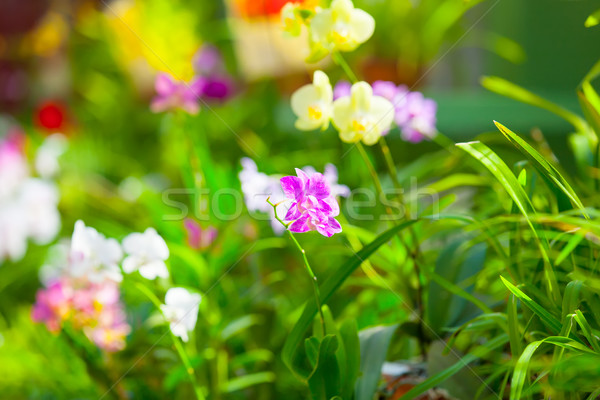 beautiful orchid flower  Stock photo © Massonforstock