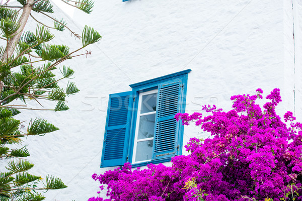 photo of the beautiful blue window with blooming trees in Greece Stock photo © Massonforstock