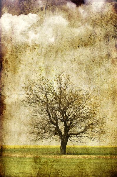 Samotny drzewo dziedzinie Fotografia starych Zdjęcia stock © Massonforstock