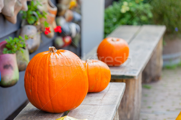 photo of delicious orange pumpkins of different sizes on the woo Stock photo © Massonforstock
