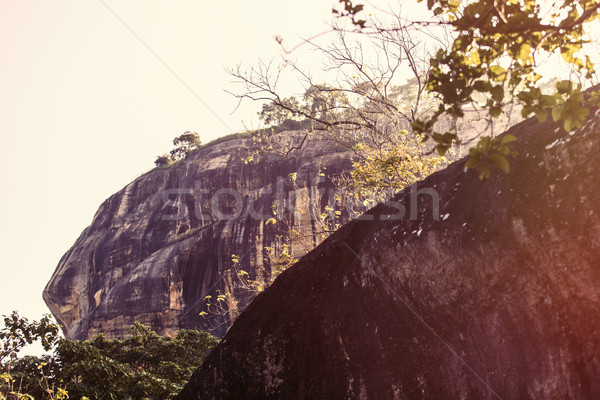 Sri Lanka tropical forest Stock photo © Massonforstock