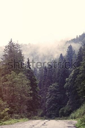 Przeciwmgielne lasu jesienią czasu drzewo krajobraz Zdjęcia stock © Massonforstock