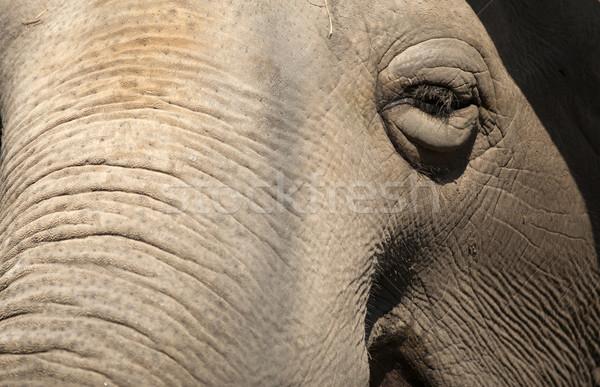 Velho elefante jardim zoológico textura cara natureza Foto stock © Massonforstock