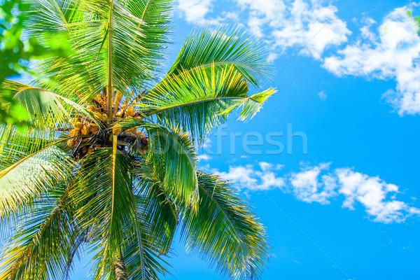 Palmeira céu árvore folha palma relaxar Foto stock © Massonforstock