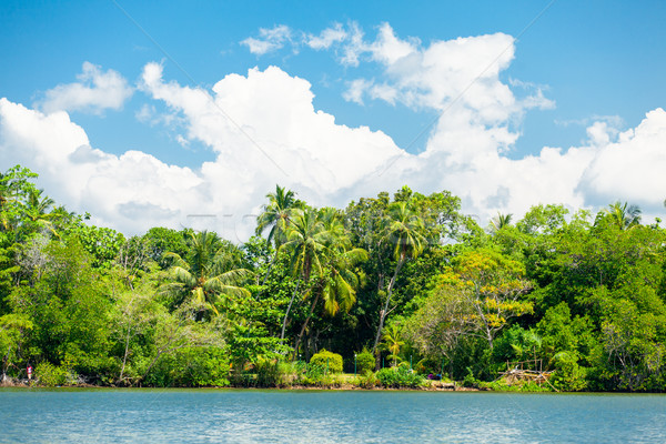 Lovely tropical coast Stock photo © Massonforstock